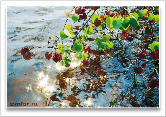Блики солнца на воде и ветка осины