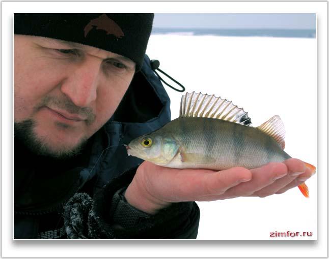 Окунь на ладони рыболова
