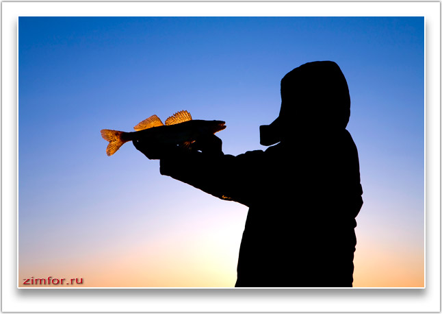 Рыболов и судак на закате
