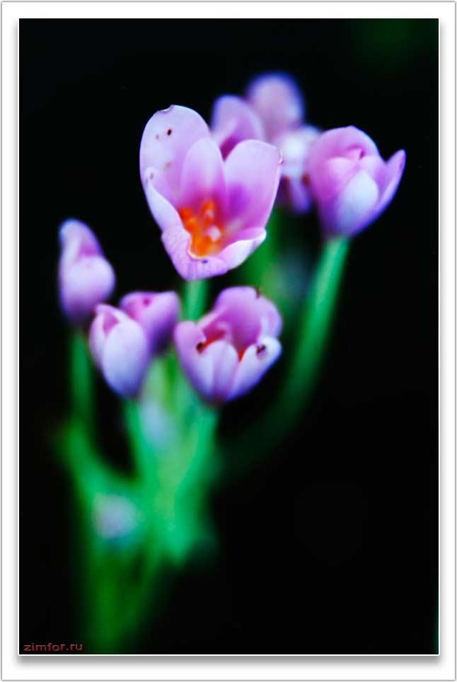Первые весенние цветы. Фото