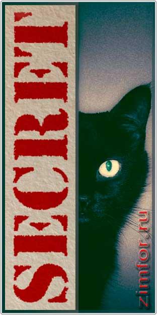 Кот чёрный. Секретный
