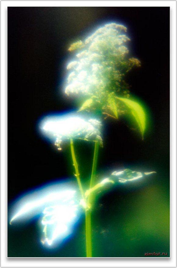 Фотография растения крупным планом, монокль