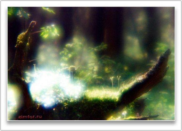 Лесной пейзаж, контровой свет, монокль