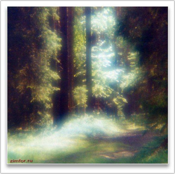 Дорога в лесу, монокль, контровой свет