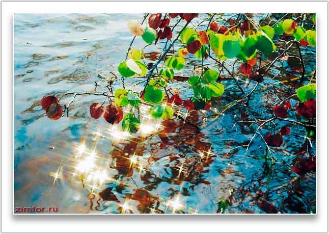Ветка осины над водой в осенний солнечный день