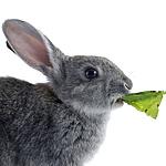 фототермин заяц