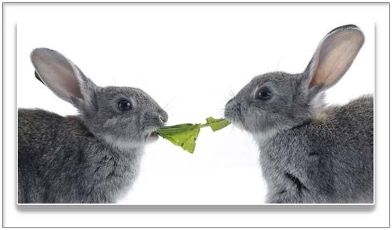 Фототермин зайцы