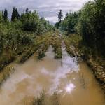 Как фотографировать лесные дороги?