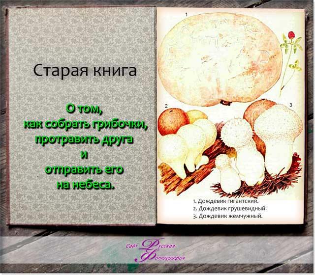 На фотографии грибы Шампиньоновые: дождевик грушевидный, дождевик жемчужный, головач гигантский.