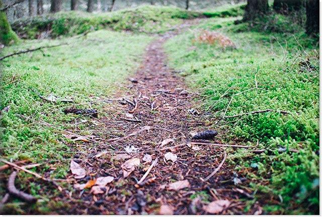 Тропинка в лесу, ведущая к грибам дождевикам.
